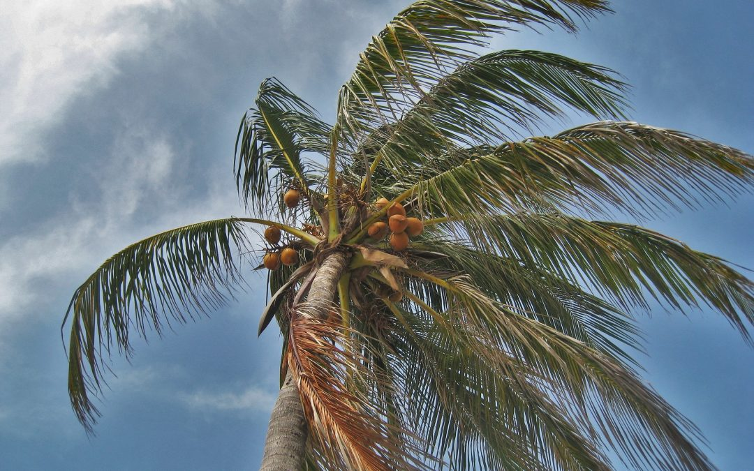 The fiscal implications of hurricane strikes in the Caribbean