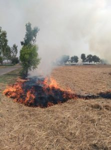 Burning stubble Credit: Raschpal Singh and Hansa Singh