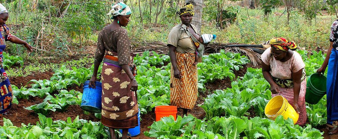 Short Course: African irrigation development: planning for a productive future